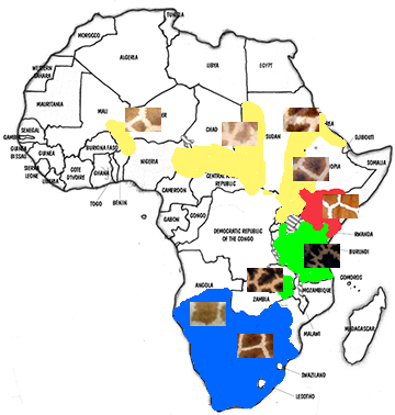 Figure 4. Fig. 4 shows the ranges of giraffes with their respective coat colors. The Northern giraffe is yellow, the Southern giraffe is blue, the Masai giraffe is green, and the Reticulated giraffe is red. The ranges are from a more optimistic source.