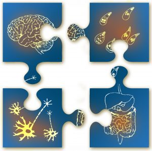 Blue puzzel pieces with a brain, the gut, neurons, and bacteria on separate pieces. Almost interlocking.