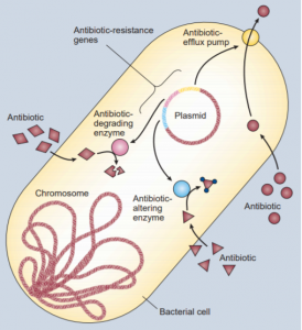 A bacteria showing multiple strategies for antibiotic resistance