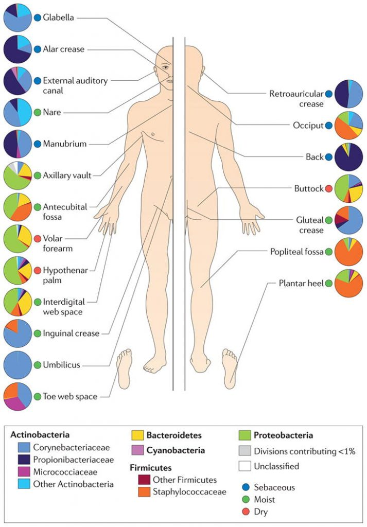 This image illustrates common microbial composition of the human skin at various sites.