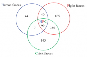 A Venn Diagram showing the shared and unique ARGs between humans, chickens and pigs.