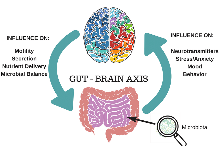 bidirectional link of between gut and brain. Brain influences motility, secretion, nutrient delivery and microbial balance in the gut. Gut influences neurotransmitters, stress/anxiety, mood and behaviour for the brain.