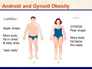 Female(gynoid fat: hips, thighs and breasts) vs male (android fat: upper-body and trunk) fat distributions